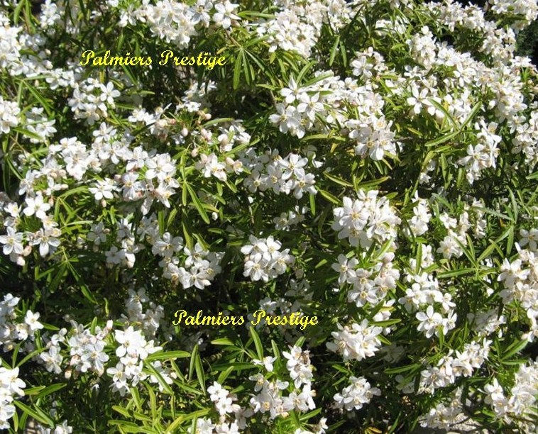 Plantes vivaces et arbustes originaux aux feuillages for Plantes arbustes vivaces
