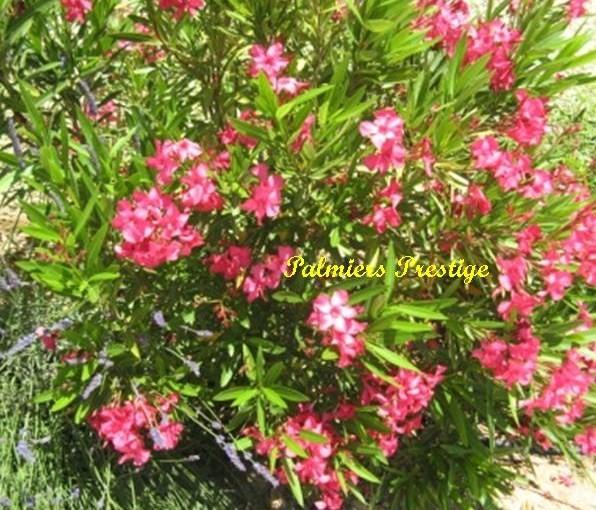 Plantes vivaces fleuries images for Plantes et arbustes vivaces